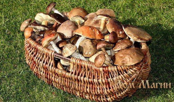 Собирать грибы на кладбище