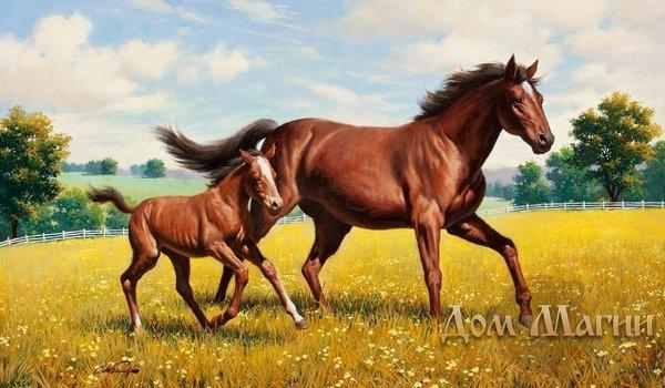 Окрас лошади во сне
