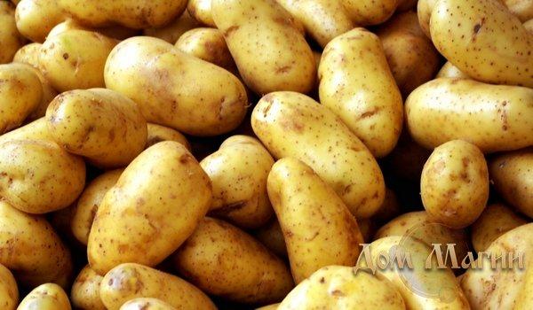 Сонник картошка крашыть