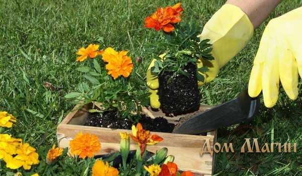 Садить цветы - сонник