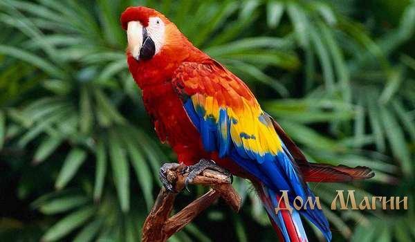 Большой разноцветный попугай во сне
