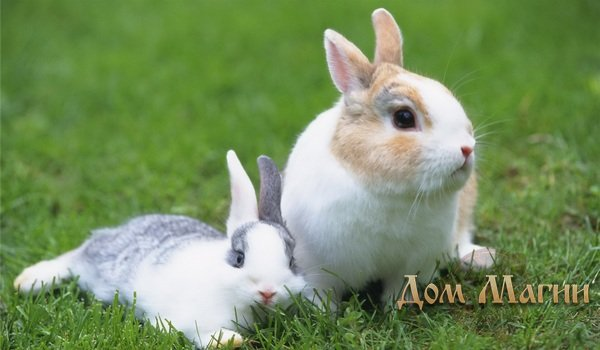 Кролики во сне