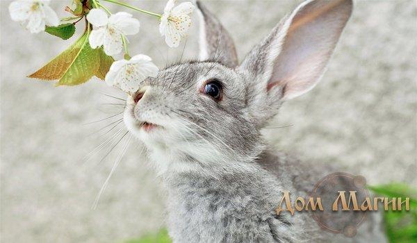 Снится серый кролик