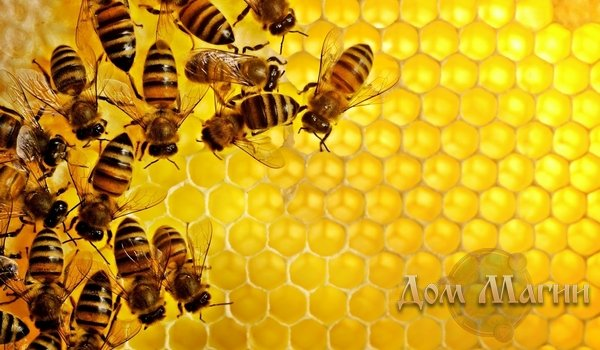 К чему снятся пчелы? Сонник – рой пчел во сне – сплоченный дружный коллектив.