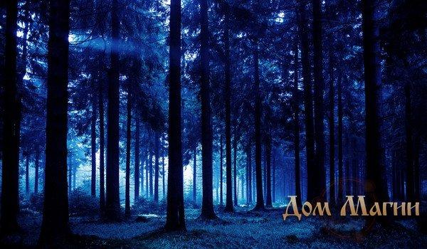 Прогулка ночным лесом во снах