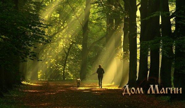 Гулять по лесу – толкование сна