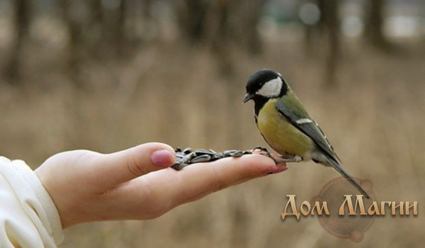Кормить семечками птиц