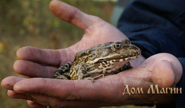 Жаба в руке