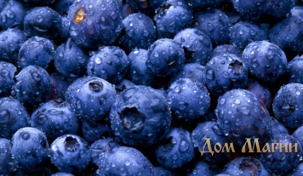 Черные ягоды в сновидении