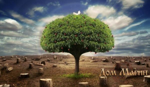 Пни деревьев во снах