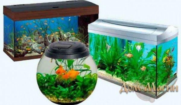 Много рыб в маленьком аквариуме