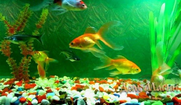 Кормить аквариумных рыб во сне