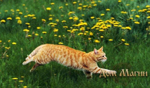 К чему снится убегающая кошка?