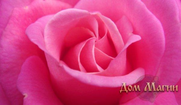 К чему снится розовый цвет, так ли радостно все будет?