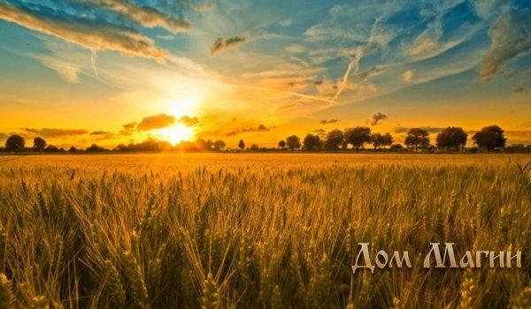 Пшеничное поле в сновидении