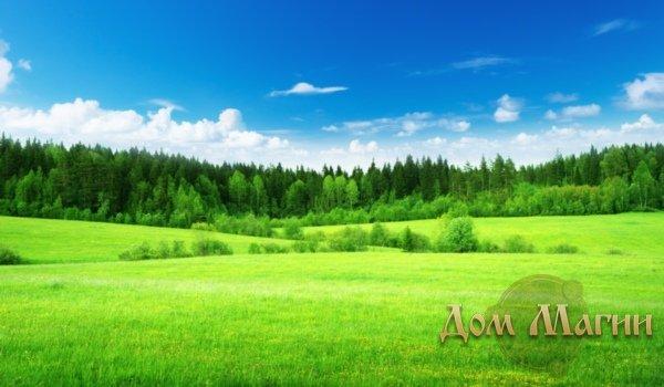 Сонник зеленая трава к чему снится зеленая трава во сне