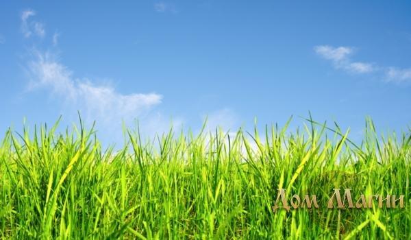 Луг с зеленой травой